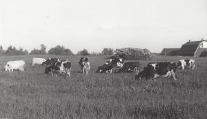 Mellen Farm Pasture C1960